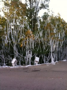 Six POM cases of toilet paper covered this property.  Photo taken by Liza Wiemer